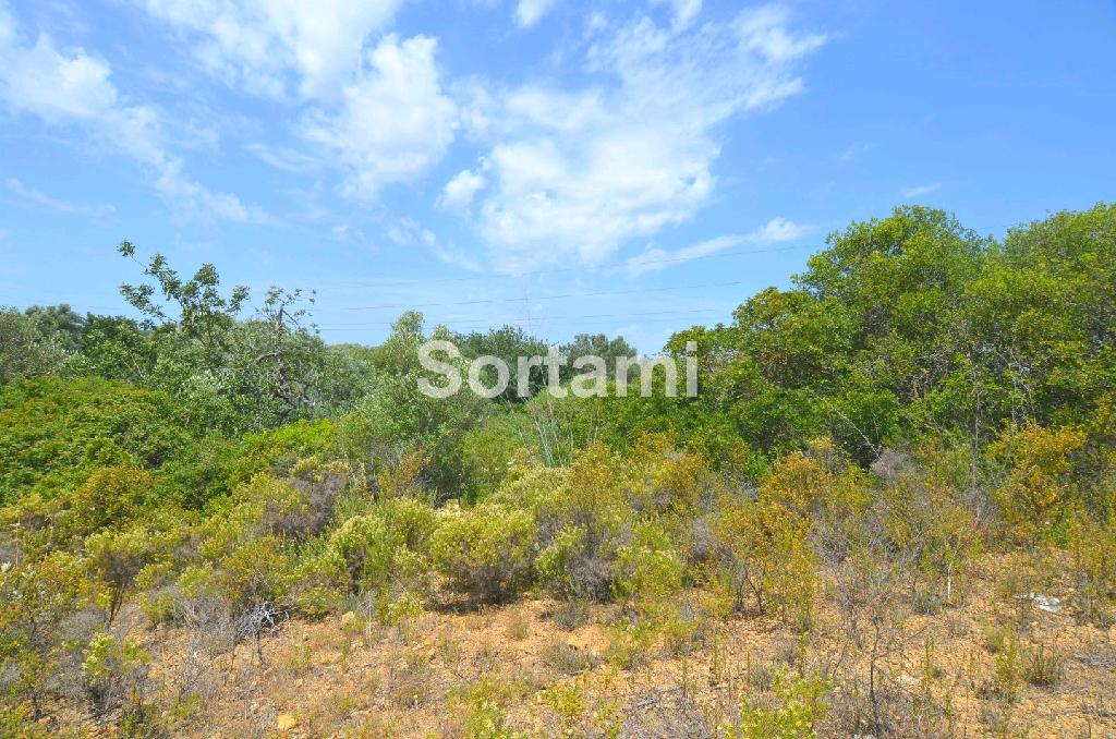 Rustic Land , Algarve, Almancil